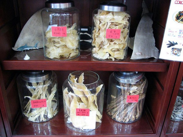 shark fins for chinese medicine