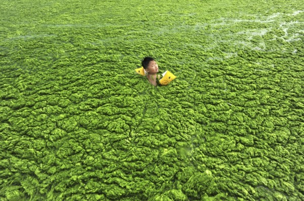 green algae swimmer