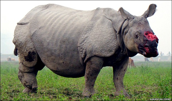 poachers rhino