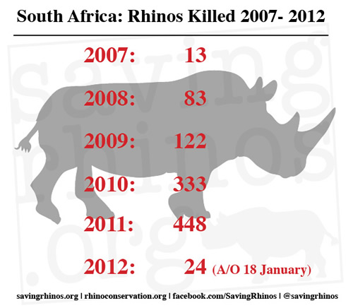 number of rhino killed
