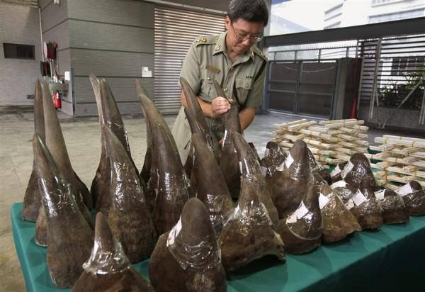 rhino horn customs