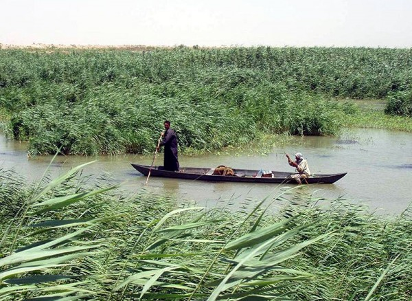 iraq marshlands