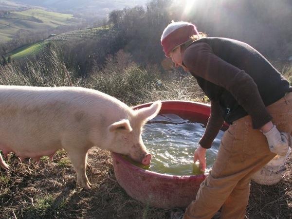 woofing organic farm