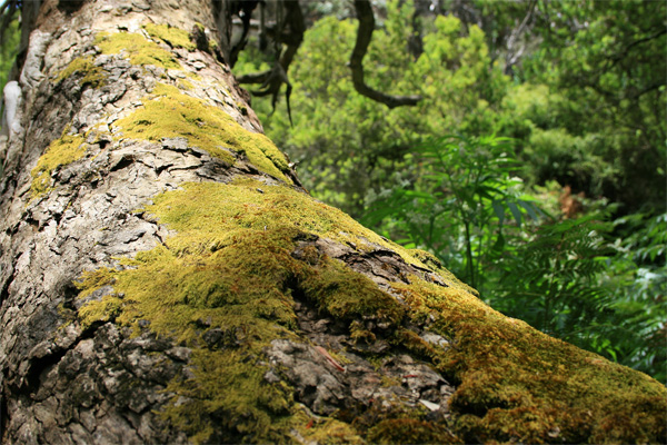 trees of australia