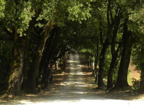 Italian agriturismo pipistrelli path