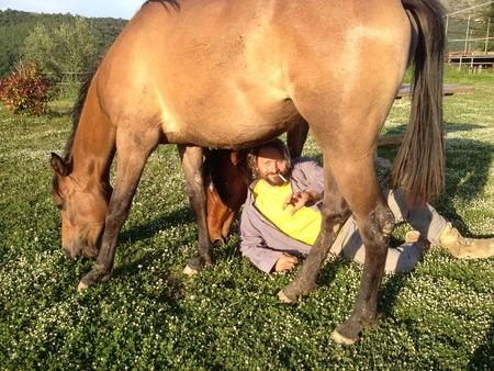 monestevole tending horses
