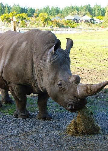 rhino orana park