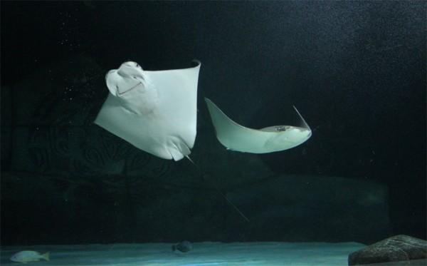 rays underwater world sea life