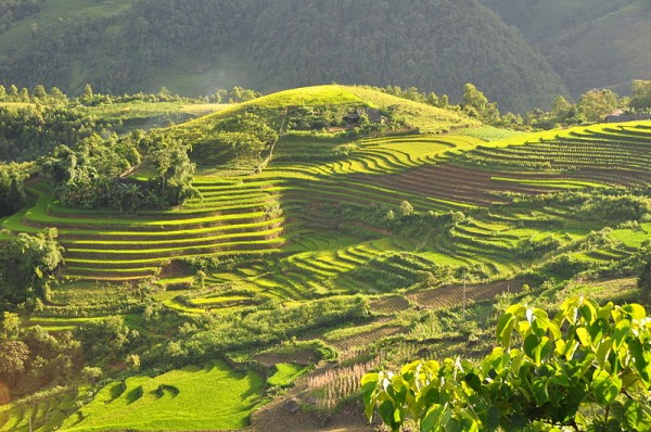 paddy fields Sa Pa Vietnam
