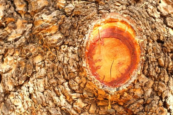 Trees and sap heide park