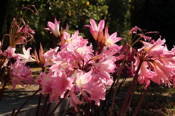 flowers heide museum