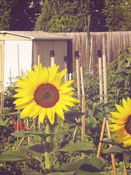 merri creek community garden