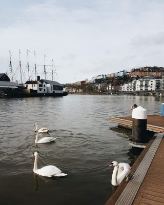 Swans on the River Avon, #Bristol, with the colourful houses of Hotwells and SS Great Britain in the background. Such a lovely place to have a wander around.⠀⠀⠀⠀⠀⠀⠀⠀⠀ ⠀⠀⠀⠀⠀⠀⠀⠀⠀ #visitbristol #swans #riveravon #travel #travelblogger #bristolbloggers #igersbristol