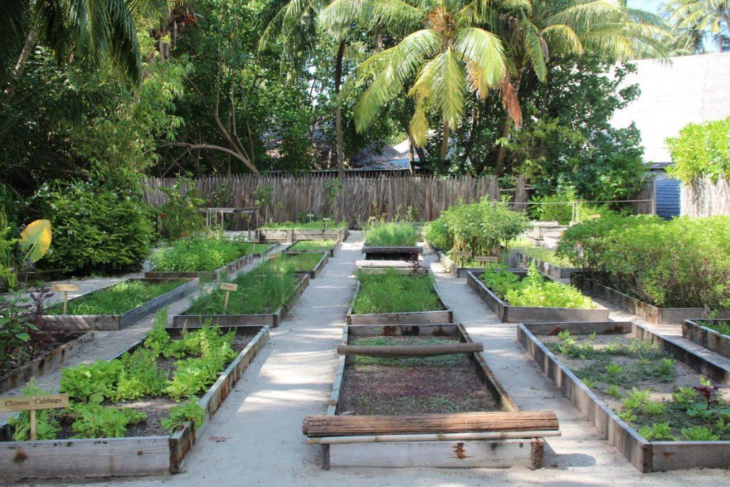 gili lankanfushi kitchen garden